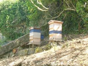 Andy's beehives